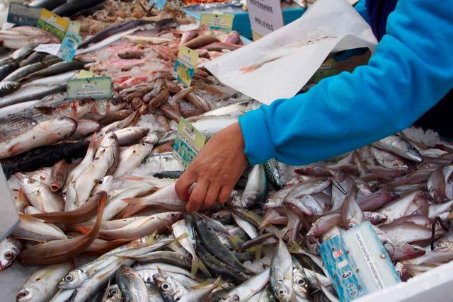 Fish Selection.