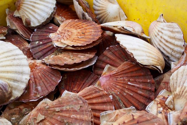 Coquille St. Jacques.