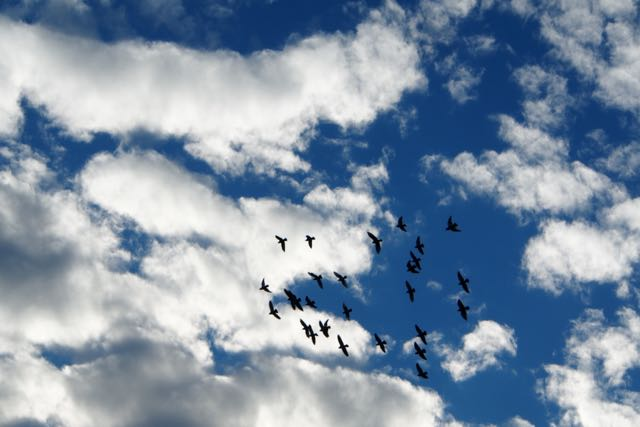 Birds flying high.