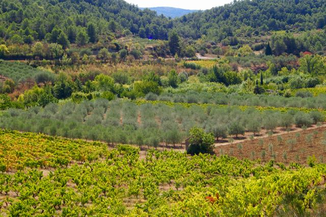 Vineyards and Olive Groves.