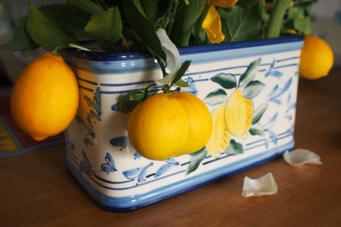 Meyer lemon arrangement.